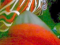 encoxcando falda de colores madura bus
